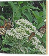 Monarch Butterfly 47 Wood Print
