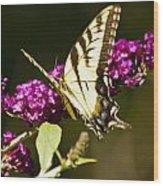 Monarch Butterfly 5 Wood Print
