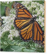 Monarch Butterfly 52 Wood Print