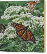 Monarch Butterfly 54 Wood Print