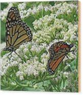 Monarch Butterfly 56 Wood Print