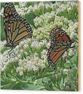 Monarch Butterfly 57 Wood Print