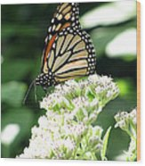 Monarch Butterfly 58 Wood Print