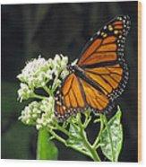 Monarch Butterfly 59 Wood Print