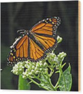 Monarch Butterfly 60 Wood Print