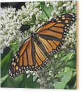 Monarch Butterfly 62 Wood Print