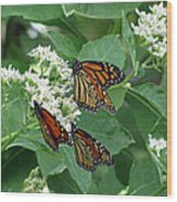 Monarch Butterfly 63 Wood Print