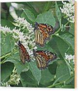 Monarch Butterfly 64 Wood Print