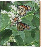 Monarch Butterfly 66 Wood Print