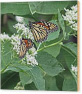 Monarch Butterfly 67 Wood Print