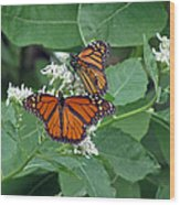 Monarch Butterfly 68 Wood Print