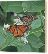 Monarch Butterfly 69 Wood Print
