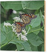 Monarch Butterfly 70 Wood Print