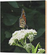 Monarch Butterfly 71 Wood Print
