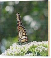 Monarch Butterfly 72 Wood Print