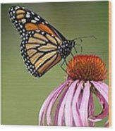 Monarch Butterfly 8 Art Print By Bear Paw Resort Photography