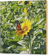 Monarch Butterfly And Guest Wood Print