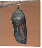 Monarch Butterfly Chrysalis II Wood Print