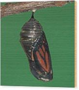 Monarch Butterfly Chrysalis Iv Wood Print