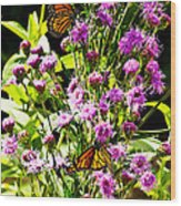 Monarch Butterfly Couple Wood Print