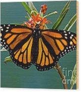 Monarch Butterfly Danaus Plexippus Wood Print