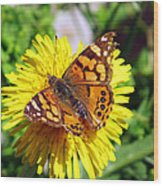 Monarch Butterfly Feeding On A Yellow Dandelion Flower Wood Print
