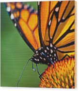 Monarch Butterfly Headshot Wood Print