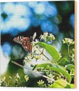 Monarch Butterfly I Wood Print