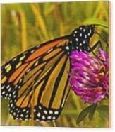 Monarch Butterfly On Flower Wood Print