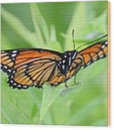 Monarch Butterfly Rocking Chair Wood Print