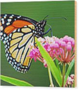 Monarch Butterfly Simple Pleasure Wood Print