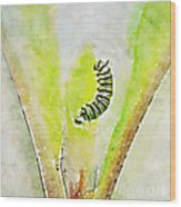 Monarch Caterpillar - Digital Watercolor Wood Print