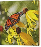 Monarch Days 1 Wood Print