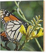 Monarch Feeding Wood Print
