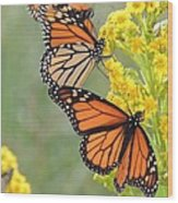 Monarch Gathering Wood Print by Laurence Van Oliver