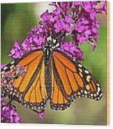 Monarch Hangs On To Buddleia Wood Print