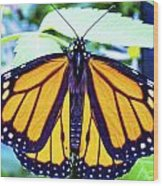 Monarch I Wood Print