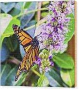 Monarch II Wood Print