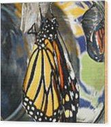 Monarch In A Jar Wood Print