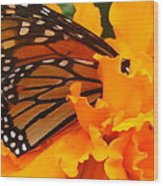 Monarch In The Marigold Wood Print