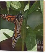 Monarch In The Shade Wood Print