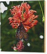 Monarch Ins 42 Wood Print