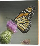 Monarch Of The Wild Wood Print