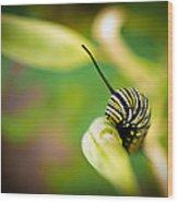 Monarch Offspring Wood Print