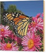 Monarch On Pink Asters Wood Print