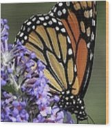 Monarch On Butterfly Bush-edition  3 Of 40 Wood Print