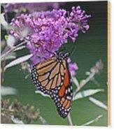 Monarch On Butterfly Bush Wood Print