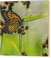 Monarch On Her Throne Wood Print
