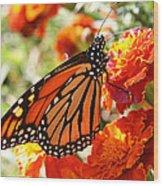 Monarch On Marigold Wood Print
