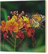 Monarch On Pride Of Barbados Wood Print